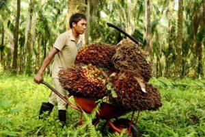 Pengiriman Spare Part ke Perkebunan Sawit